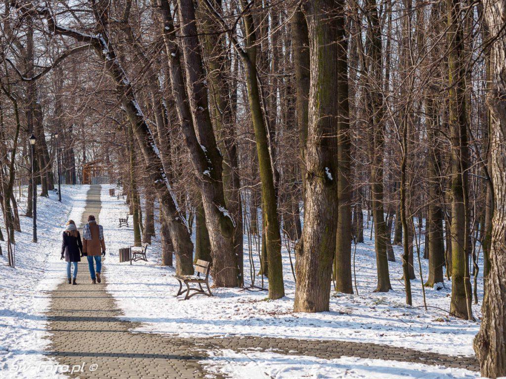 Uzbornia las, alejka w Bochni