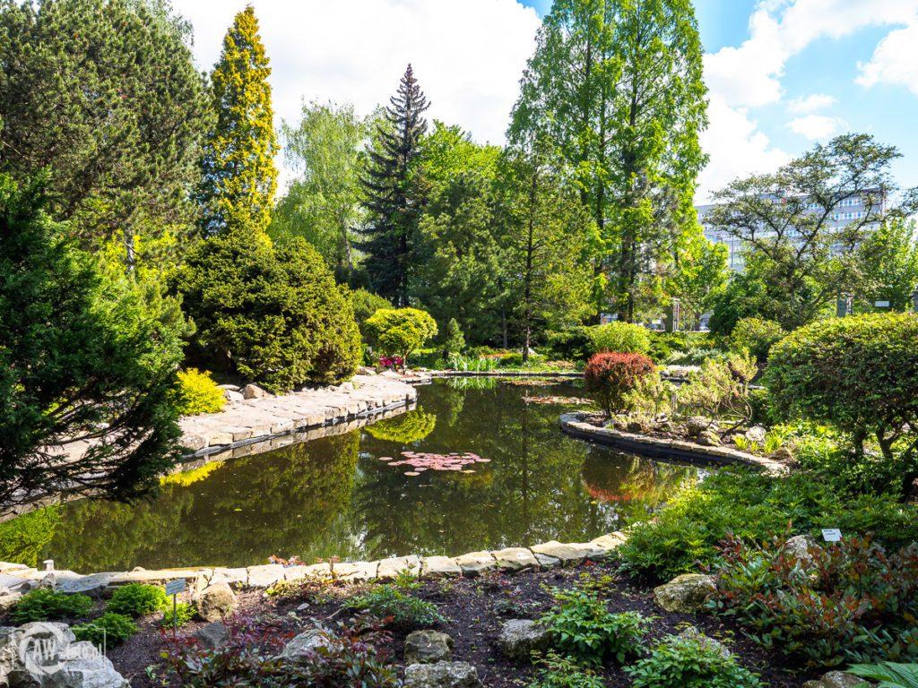 Ogród Botaniczny w Krakowie - alpinarium ozdobne ze stawem