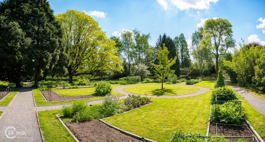 Ogród Botaniczny w Krakowie - dąb szypułkowy i rośliny użytkowe