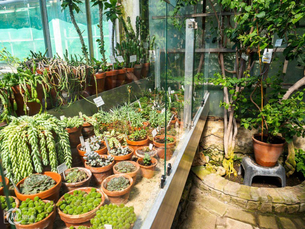 Ogród Botaniczny w Krakowie - kaktusy