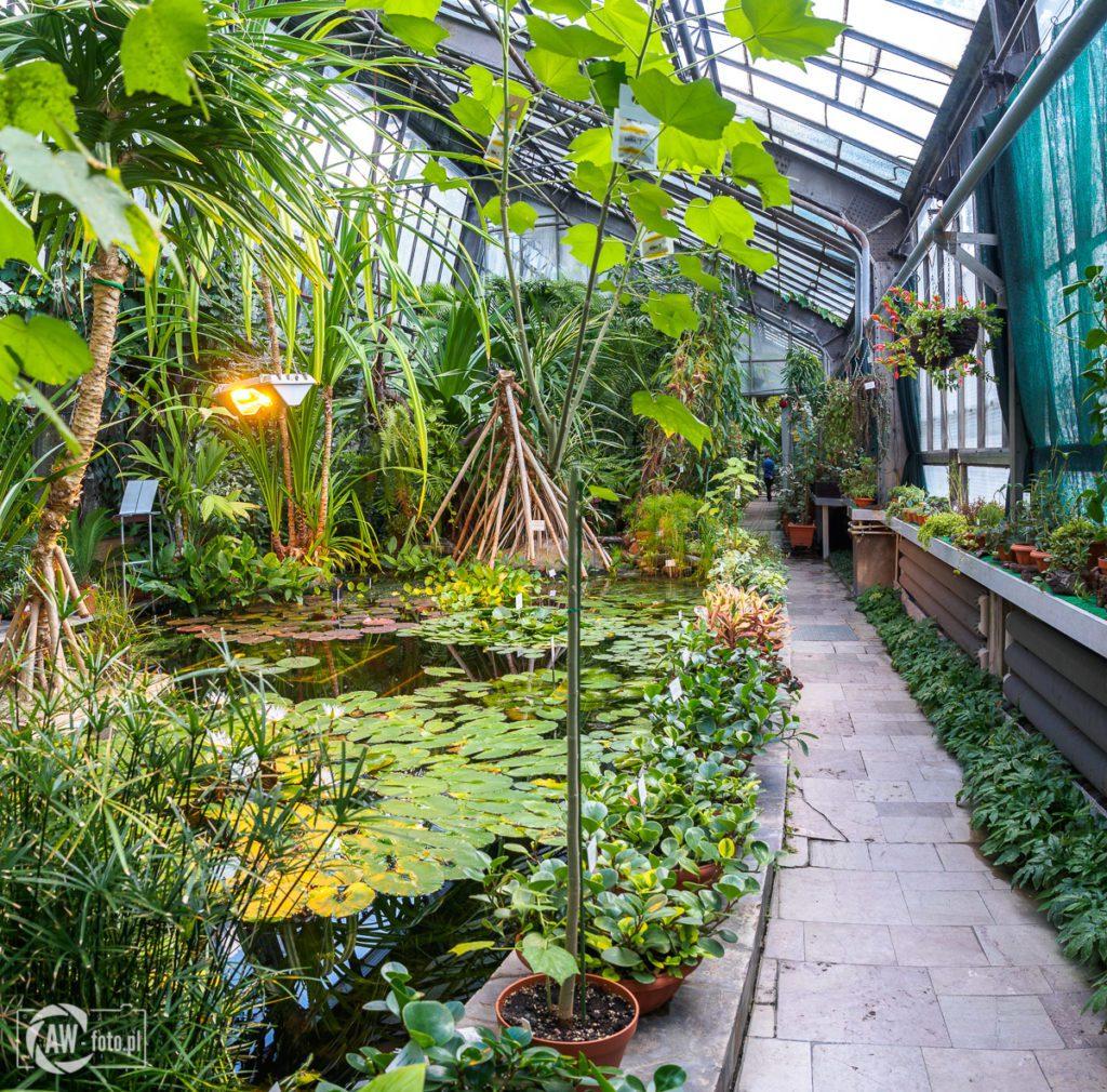 Ogród Botaniczny w Krakowie - roślinność tropikalna w palmiarni