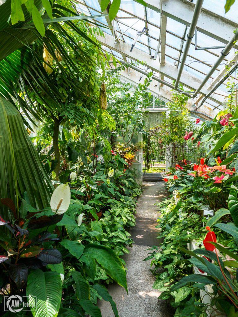 Ogród Botaniczny w Krakowie - roślinność w szklarni Victoria