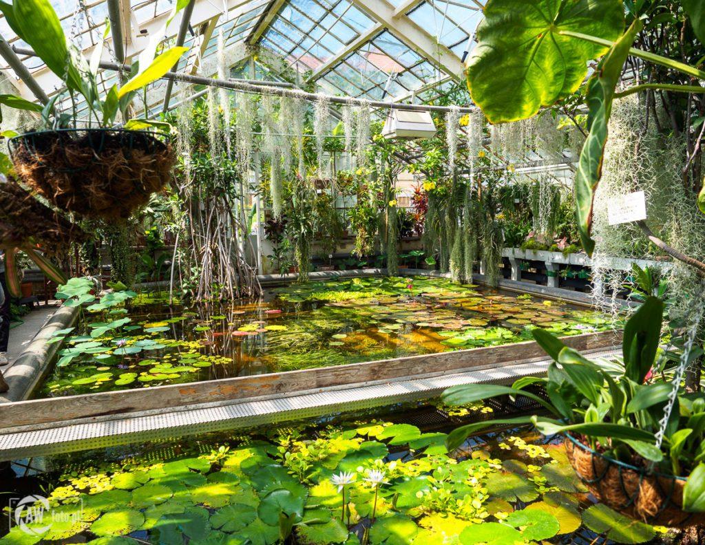 Ogród Botaniczny w Krakowie - roślinność wodna w szklarni Victoria