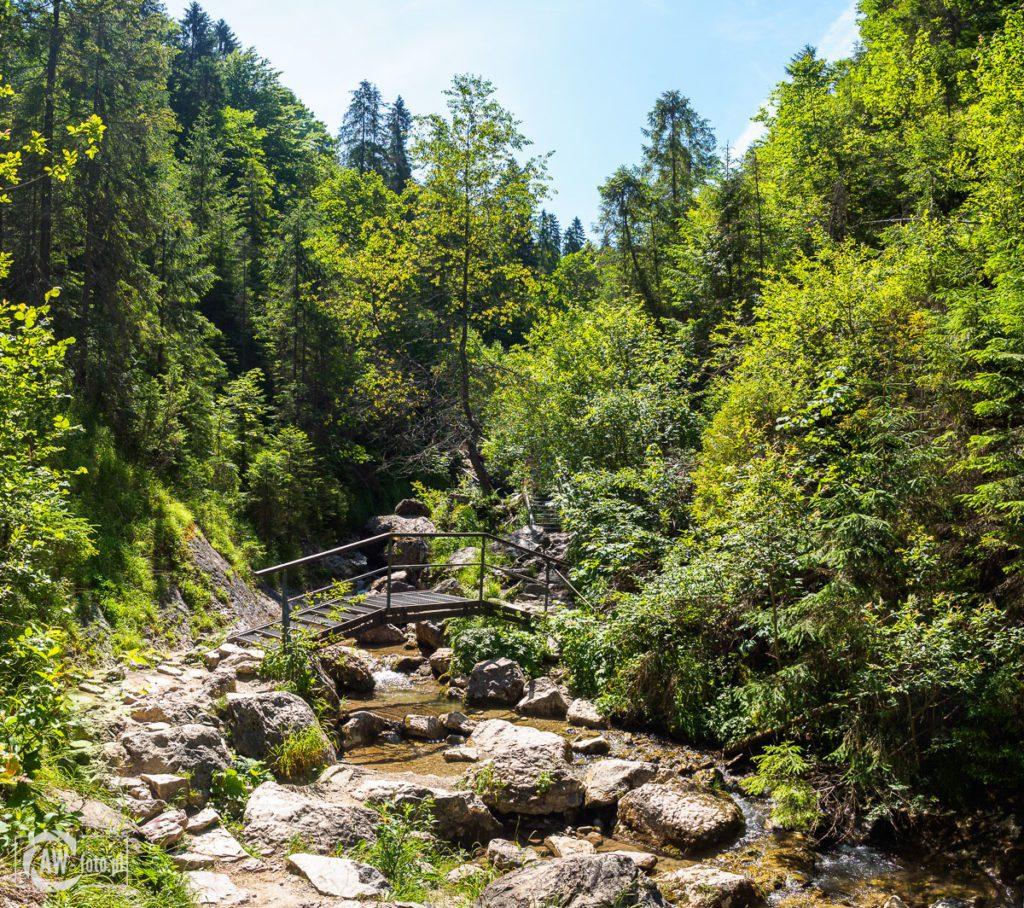 Wąwóz Homole - kładka nad potokiem Kamionka