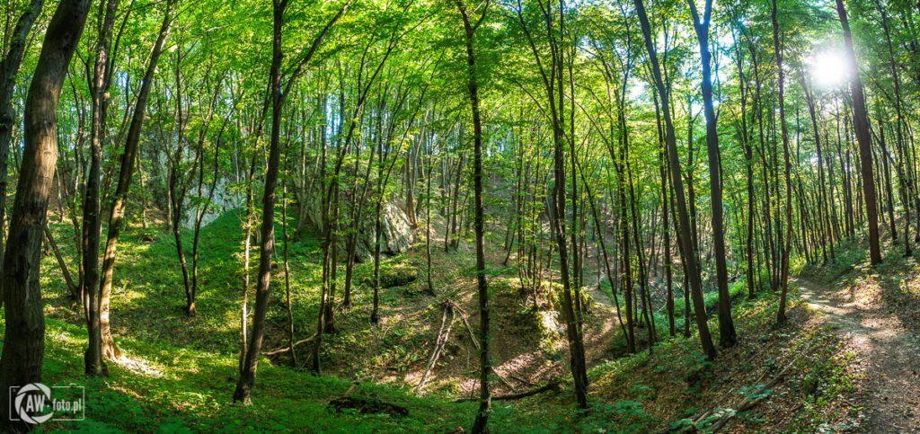 Dolina Kobylańska - widok na skały ze szlaku dla rowerów
