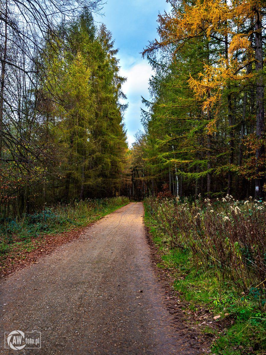 Leśne ścieżki w Puszczy Niepołomickiej 1