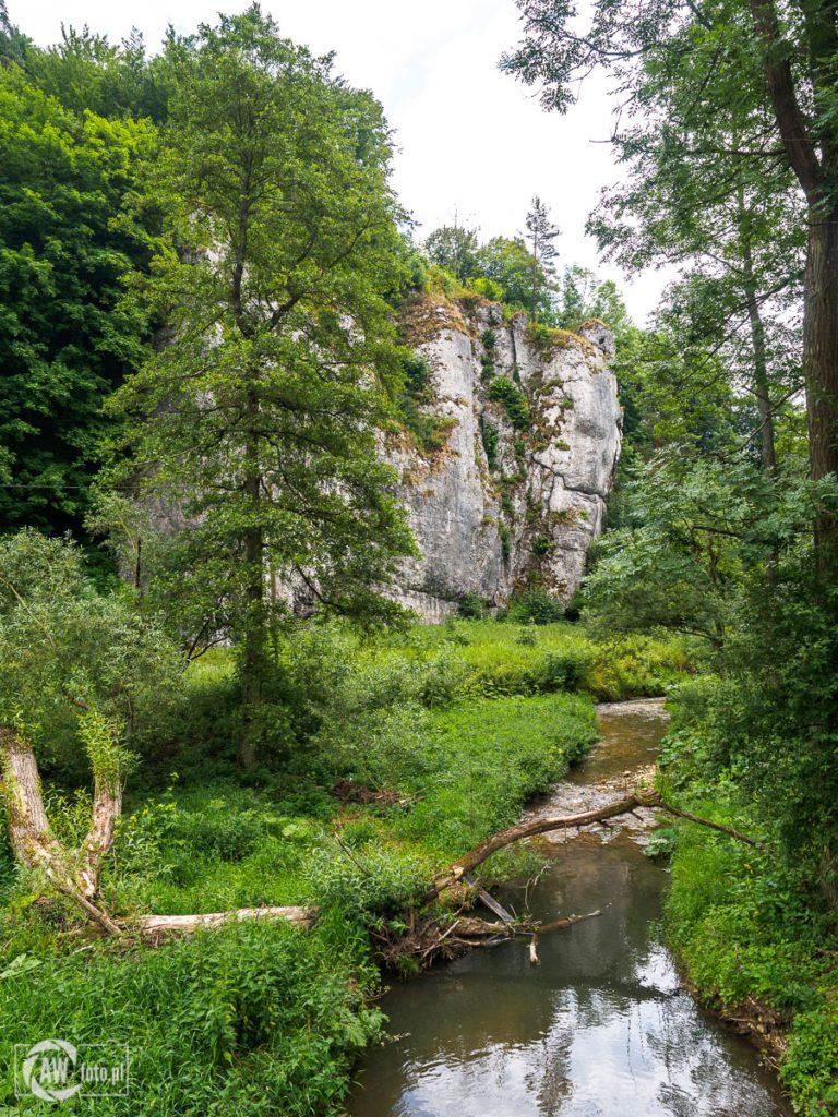 Ojcowski Park Narodowy - czerwono -żółty szlak w stronę Wzgórza Okopy