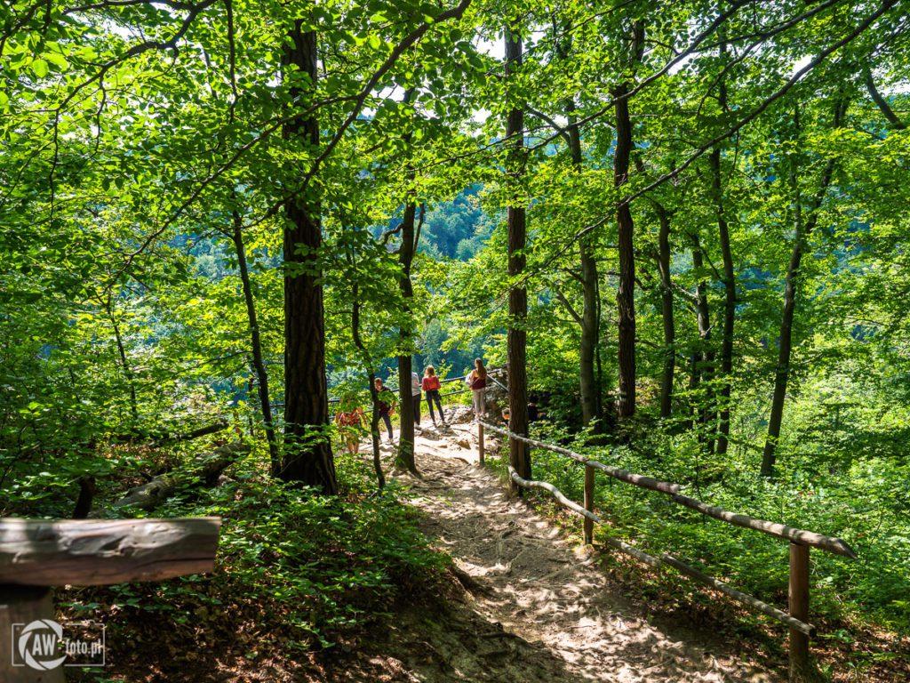 Ojcowski Park Narodowy - leśne szlaki