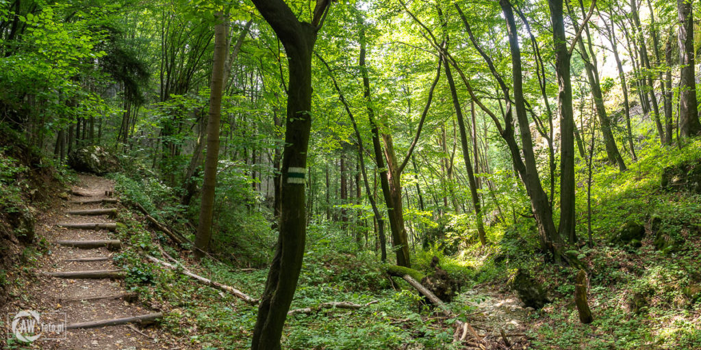 Ojcowski Park Narodowy - podejście szlakiem zielonym na Wzgórze Okopy