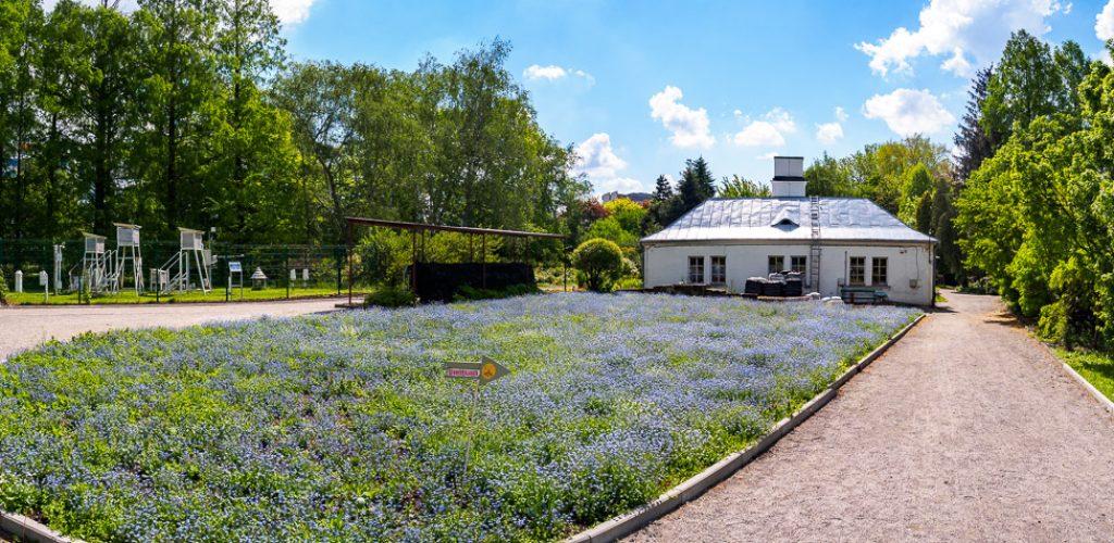Ogród Botaniczny w Krakowie - szklarnia Holenderka (storczykarnia)