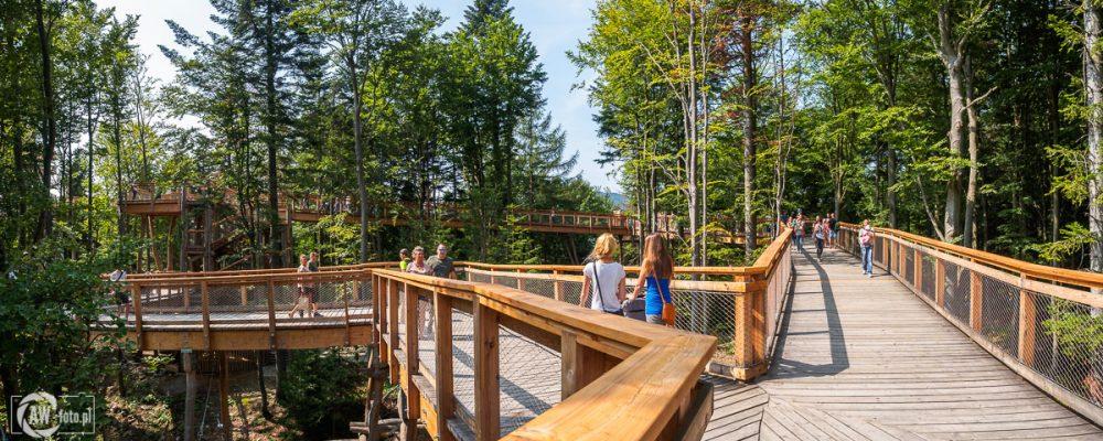Wieża widokowa w Krynicy - Zdroju - ścieżka wśród drzew